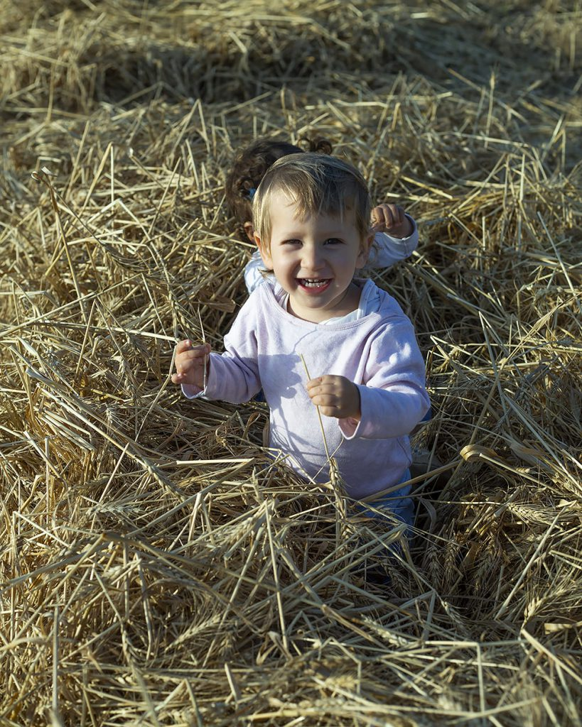 playing in wheat field