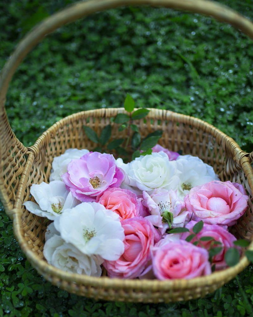 a basket of roses to decorate our rose malabi